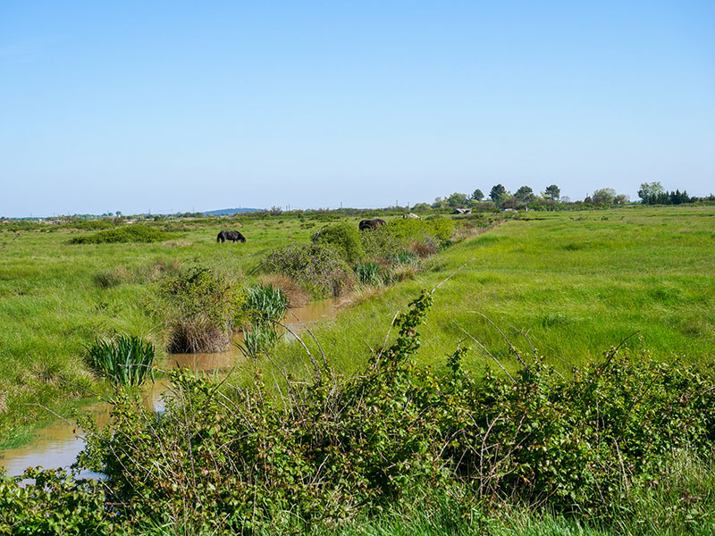 Prairies-de-Lilhan